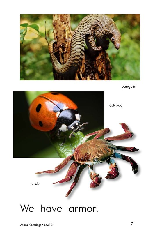 Book Preview For Animal Coverings Page 7