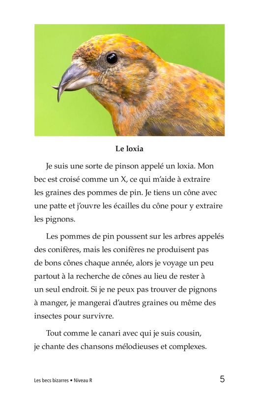 Book Preview For Weird Bird Beaks Page 5