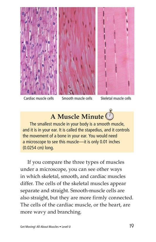 Book Preview For Get Moving! All About Muscles Page 19