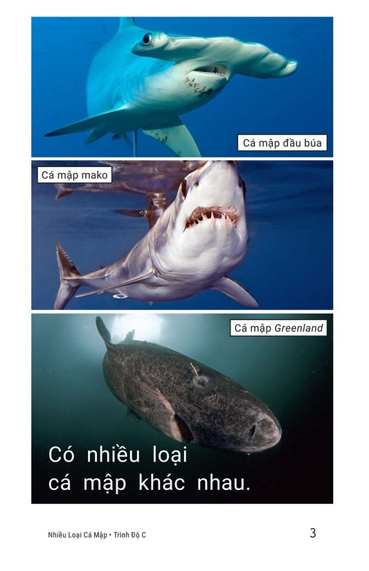 Book Preview For Different Kinds of Sharks Page 3