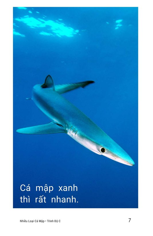 Book Preview For Different Kinds of Sharks Page 7