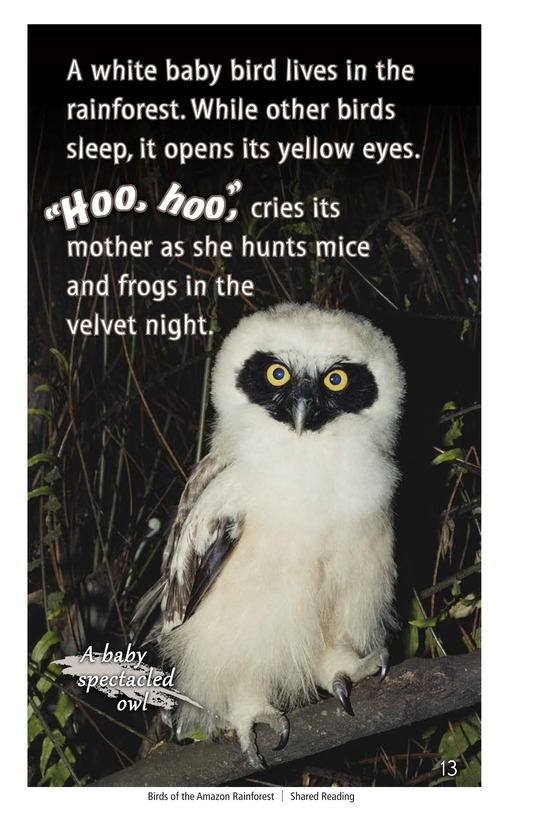 Book Preview For Birds of the Amazon Rainforest Page 13