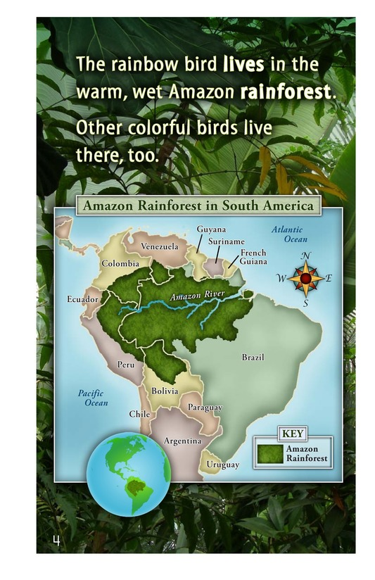 Book Preview For Birds of the Amazon Rainforest Page 4
