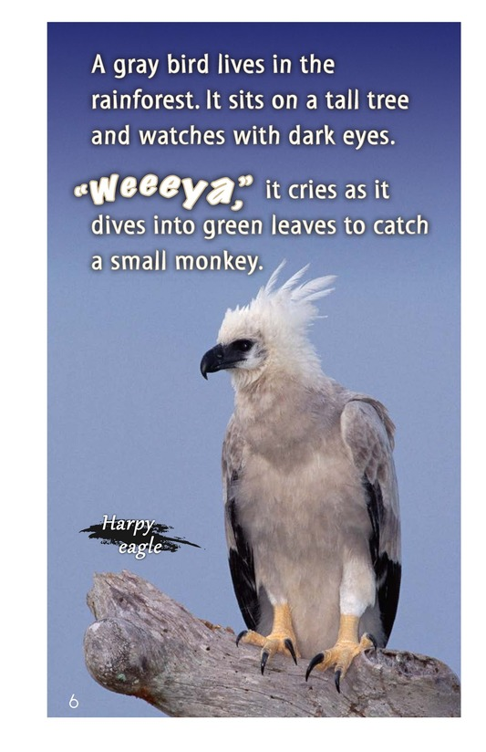 Book Preview For Birds of the Amazon Rainforest Page 6