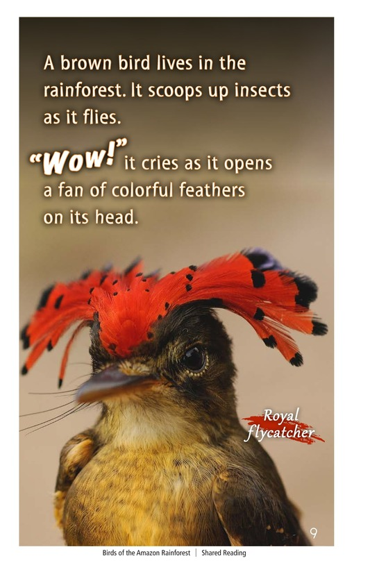 Book Preview For Birds of the Amazon Rainforest Page 9