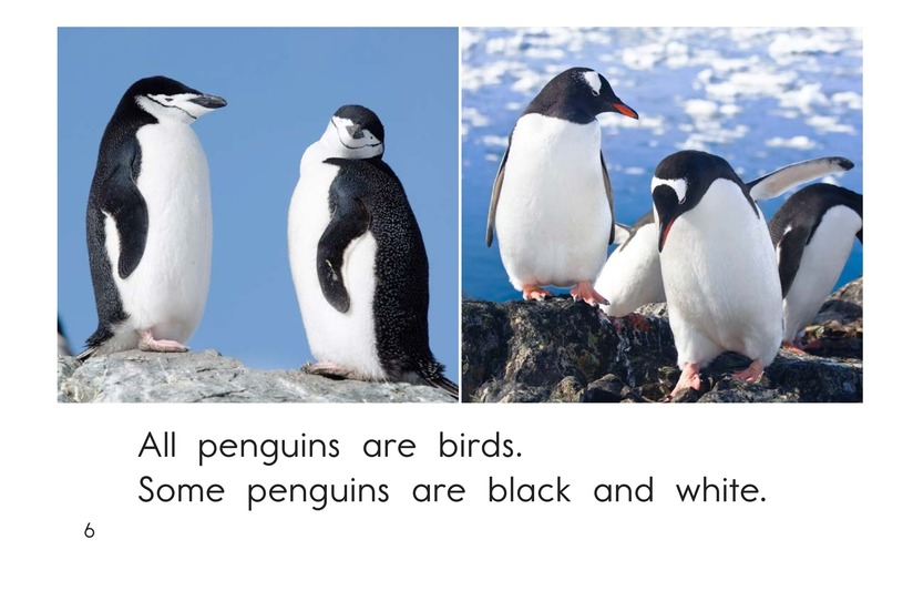 Book Preview For All About Penguins Page 6