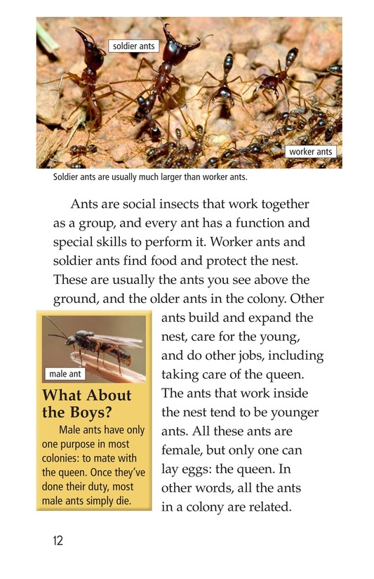 Book Preview For Awesome Ants Page 12