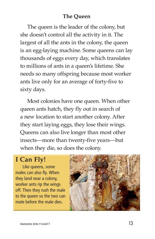 Book Preview For Awesome Ants Page 13