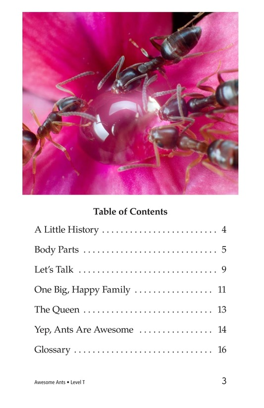 Book Preview For Awesome Ants Page 3