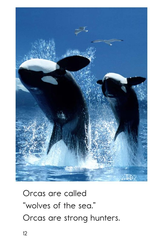 Book Preview For All About Orcas Page 12