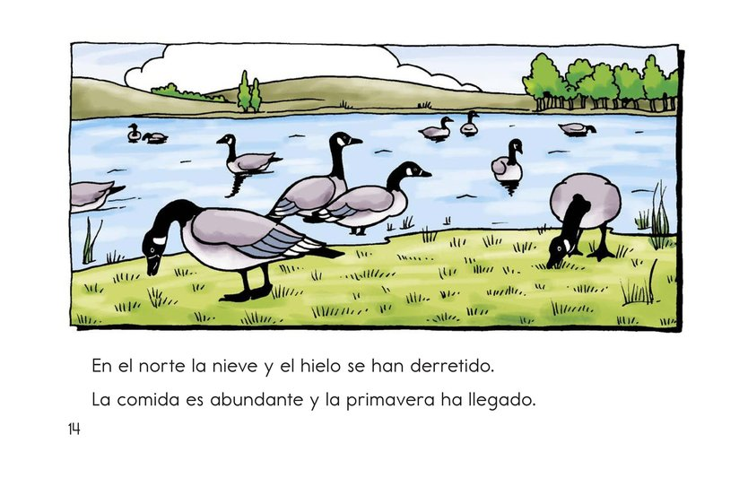 Book Preview For Migrating Geese Page 14
