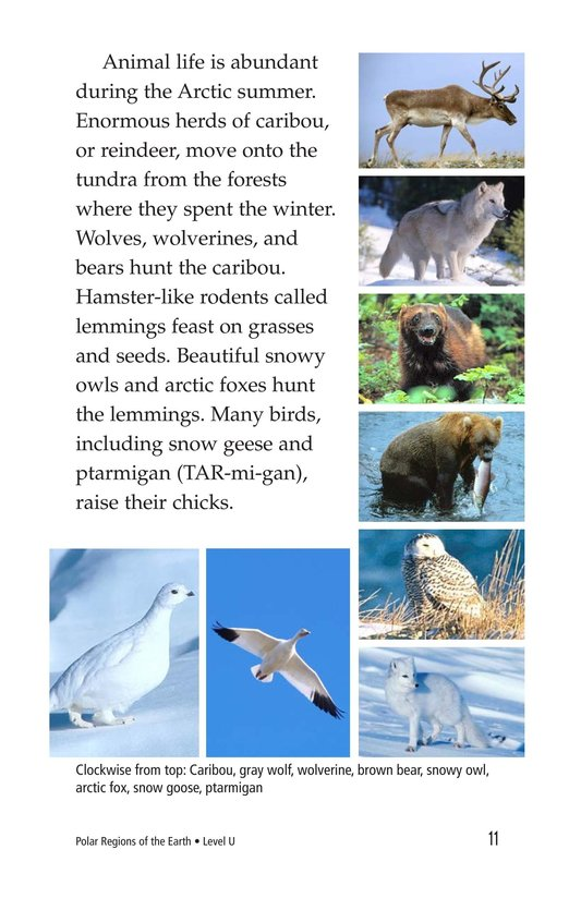 Book Preview For Polar Regions of the Earth Page 11