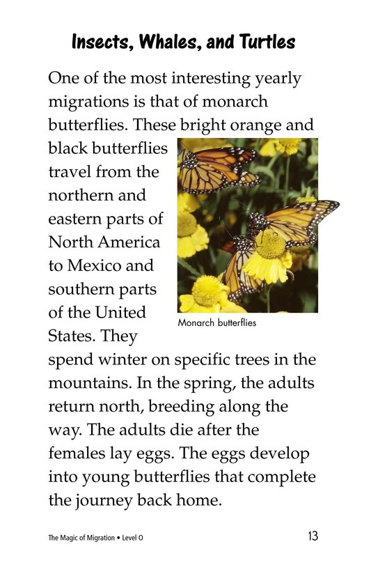Book Preview For The Magic of Migration Page 13