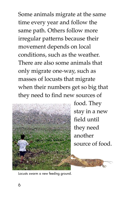Book Preview For The Magic of Migration Page 6