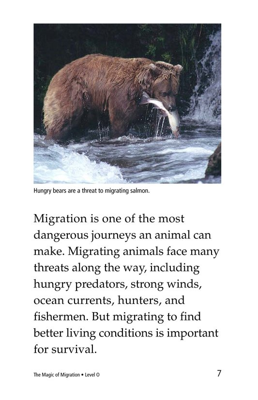 Book Preview For The Magic of Migration Page 7