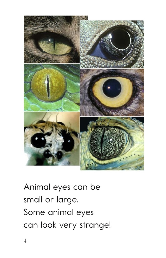 Book Preview For Animal Eyes Page 4
